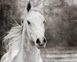 gray arabian horse black white horse stephaniemoon etsy