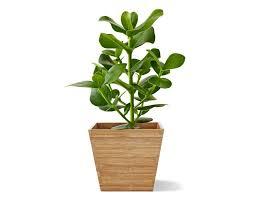 Ikea Plant Ideas by Plant Stand Pot Stands For Plants Pots Ikea Ireland Dublin Plant