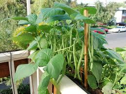 trendy inspiration balcony vegetable garden stylish decoration how