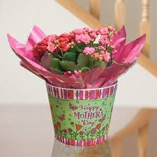 mothers day plants kalanchoe mix in decorated s day container indoor office