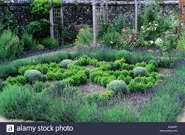 herb knot garden lavender box hedges trellis arches stock photo