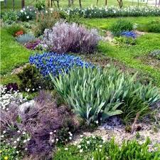 garden design garden design with shrubs beginning with t garden