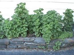 Herb Garden Design Ideas Herbs For Your Garden Medicinal Herb Garden Herb Garden Designs