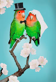 congratulations on wedding card congratulations lovebirds wedding card greeting cards hallmark