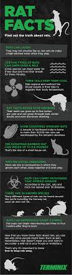 10 unique and revealing facts about rats terminix