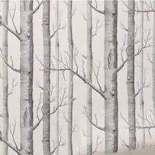 discount black birch trees 2017 black birch trees on sale at