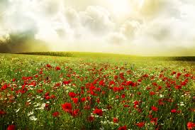 Flower Field Wallpaper - flower clouds poppies daisies meadow flowers sky field wallpaper