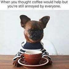 Annoyed Dog Meme - when you thought coffee would help out but you re still annoyed by