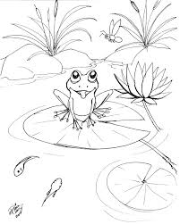 draw a frog 2 by diana huang on deviantart