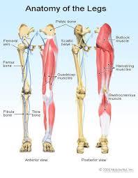 Anatomy Of The Human Body Bones Types Of Bone Fractures Healing Tailbone Collarbone U0026 Others