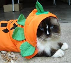 Halloween Costumes Cats Wear Dogs Cats Wearing Halloween Costumes Cats Dogs Halloween 33