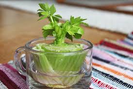 10 Vegetables U0026 Herbs You by 13 Vegetables That You Can Regrow Again And Again