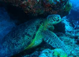 turtle time island life magazine