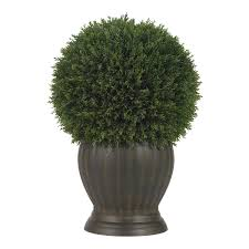 Rosemary Topiary 2 Foot Cedar Spiral Topiary Potted 5160