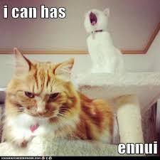 Depressed Cat Meme - i can has sigh lolcats lol cat memes funny cats