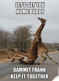 Funny Animal Pictures Memes - funny animal memes pinterest image memes at relatably com
