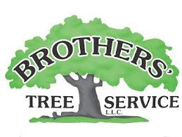 watertown ct tree service watertown ct brothers tree