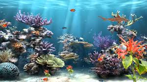 50 best aquarium backgrounds to download u0026 print free u0026 premium