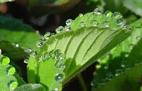 beautiful plants plants sweat and it s beautiful grist