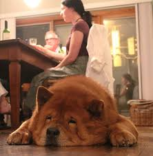 Dogs At Dinner Table Busy Super Moms The Job The Kids The Dog Oh My Dogtalk Diva