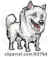 american eskimo dog vector royalty free rf american eskimo dog clipart illustrations