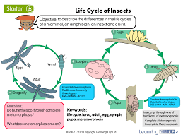 Science Worksheet Life Cycle Of Insects A Year 5 Science Worksheet
