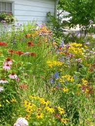 planted a butterfly and hummingbird wildflower mix in our flower