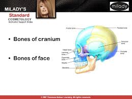 Bones That Form The Cranium Anatomy And Physiology Ppt Download