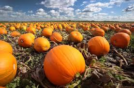 asda to sell 2 million halloween pumpkins asda halloween