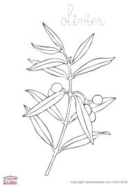 Coloriage feuilles darbre  olivier  Cabane à idées