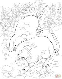 field mice coloring page free printable coloring pages