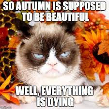Autumn Memes - grumpy cat autumn memes imgflip