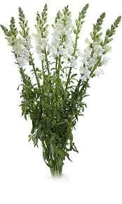 fresh flowers in bulk best 25 fresh flowers wholesale ideas on buy