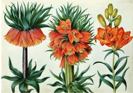 native plants in france famous botanical artists botanical art u0026 artists