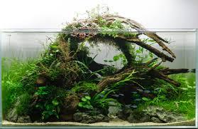 a collection of beautiful aquascapes u2013 kristelvdakker