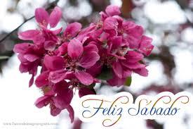 descargar imagenes de feliz sabado gratis mensajes de amor con flores para el whatsapp descargar y compartir