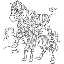 20 free printable zebra coloring pages