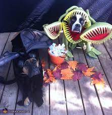 Spirit Halloween Pet Costumes 60 Costume Ideas Images Costume Ideas Pet