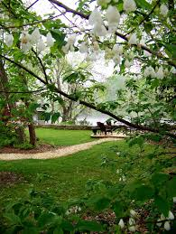 appealing trees for small backyards pics decoration inspiration