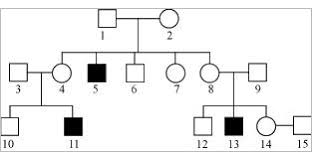 genetics practice problems pedigree tables master the genetic code class xii meritnation