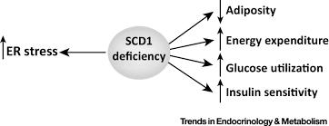 insights into stearoyl coa desaturase 1 regulation of systemic
