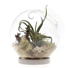 table top terrarium chive products llc