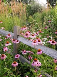 plant wildflowers in your garden and keep them tidy and organized