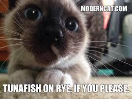 Cute Cat Memes - even more modern cat memes modern cat