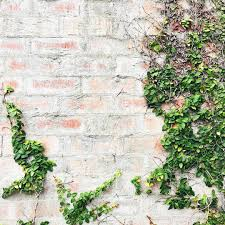 textured walls and climbing plants too pretty to walk past