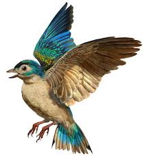 Bird Wing - dinosaur feathers to bird flight
