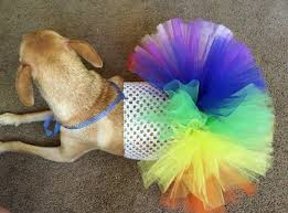 dog candy corn witch costume rainbow dog tutu rainbow pet tutu rainbow dog dress rainbow