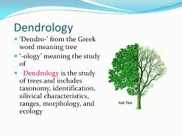 dendrology dendro from the word meaning tree ppt