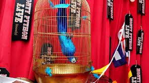 monty python u0027s u0027dead parrot u0027 sketch nation u0027s favourite itv news