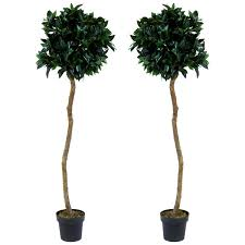 topiary trees charles bentley pair of 5ft bay laurel topiary trees